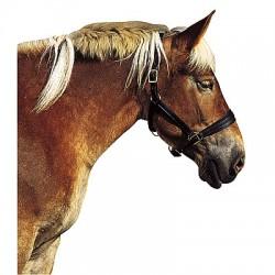 Halster voor trekpaard
