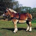 Trekpaard / Shire tuigen